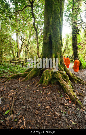 Buddhist monks in misty tropical rain forest. Sun beams shining through trees at jungle landscape. Travel background - Stock Photo