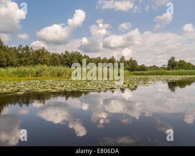 Reflections of clouds in river with lilies - Stock Photo