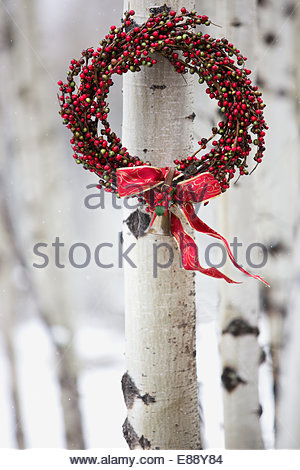 Red Christmas wreath hanging from birch tree - Stock Photo