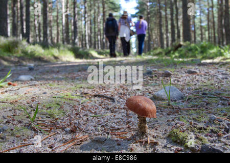 Fungus growing on track with people walking in background, Scotland - Stock Photo