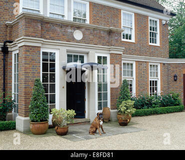 Boxer dog sitting on paving in front of large traditional country house - Stock Photo