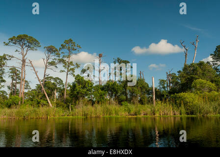 Kayaking in Little Lake in Gulf State Park in Gulf Shores, Alabama, along the Alabama Gulf Coast. - Stock Photo