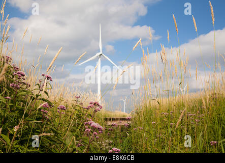 Flowers and grasses frame wind turbines in the background on a sunny day. Grey County, Ontario, Canada. - Stock Photo