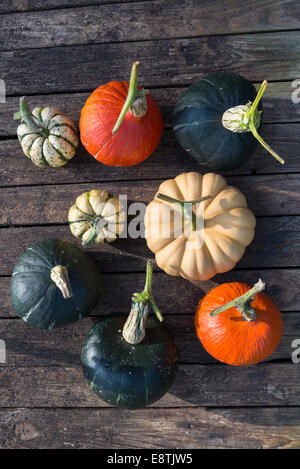 A selection of winter squashes 'curing' in the sunshine. (Hokkaido, Burgess Buttercup, Autymn Crown, Sweet Dumpling). - Stock Photo