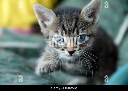 Baby cat portrait - Stock Photo