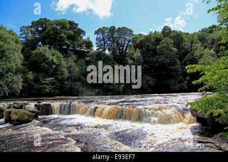 3295. Upper Aysgarth Falls, River Ure, Aysgarth, Wensleydale, North Yorkshire, UK - Stock Photo