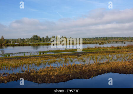 Waterlogged, renatured bog with bulrushes (Schoenoplectus lacustris), and birches (Betula pubescens) - Stock Photo