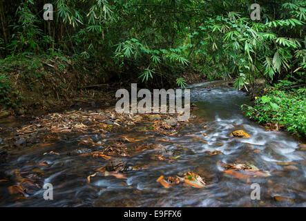 Stream flowing through tropical rainforest in Kaeng Krachan National Park, Thailand - Stock Photo