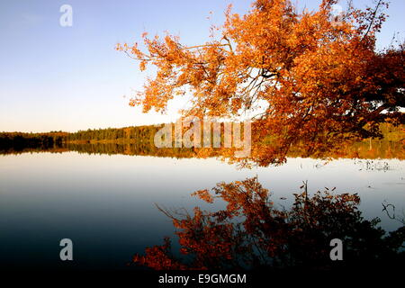 Autumn leaves changing color reflected on a lake's surface - Stock Photo