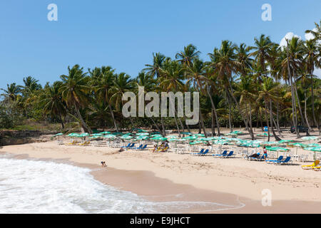 Dominikanische Republik, Osten, Juan Dolio, Playa Caribe - Stock Photo