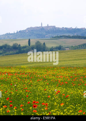 Pienza, Tuscany, Italy. View across fields to the distant hilltop town, colourful wild flowers in foreground. - Stock Photo
