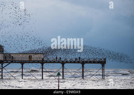Aberystwyth Wales UK, Sunday 2 November 2014  Tens of thousands of starlings flying over Aberystwyth as the 'murmuration' - Stock Photo