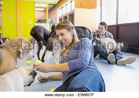 Daycare owner with tennis ball playing with dogs - Stock Photo
