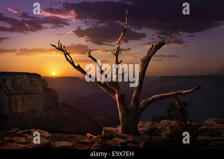 A tree is seen on the rim of the Grand Canyon, National Park near Tusayan, Arizona, United States, June 11, 2014 - Stock Photo