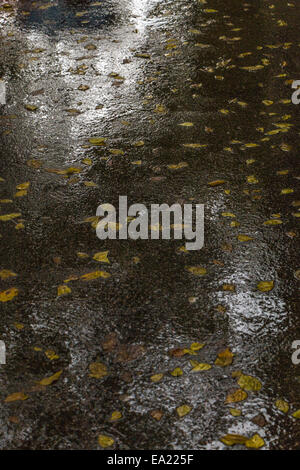 Yellow leaves on a wet asphalt road - vertical composition - Stock Photo