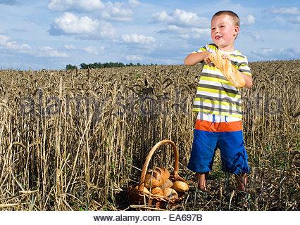 little boy with bread in a cornfield - Stock Photo
