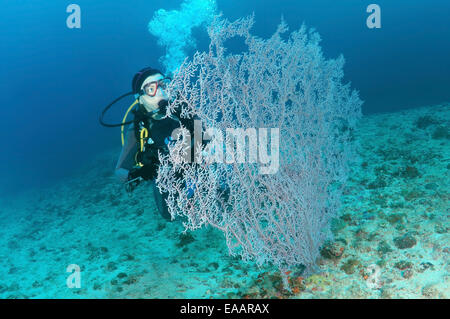 Diver looking at a soft corals Gorgonaria, Bohol Sea, Philippines, Southeast Asia - Stock Photo