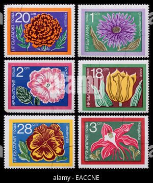 Bulgaria - circa 1978: A post stamp printed in the Bulgaria shows image of flowers, series Flowers, circa 1978. - Stock Photo