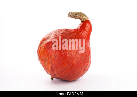 Red Kuri isolated on white - Stock Photo