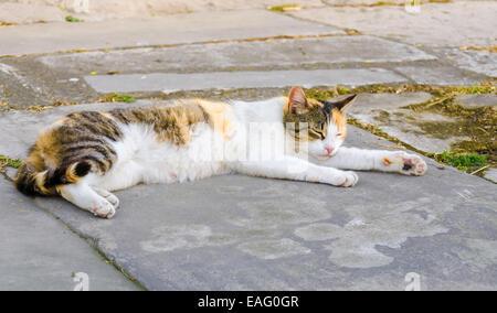 Lying street cat - Stock Photo