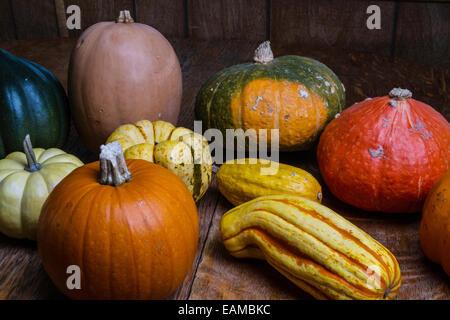 An assortment of winter squash, kabocha, sugar pumpkin, delicata, sweet dumpling, red kuri, acorn, gourd, white - Stock Photo
