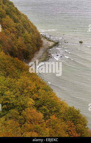 view down the chalk coast at the Baltic Sea, Germany, Mecklenburg Vorpommern, Jasmund National Park - Stock Photo