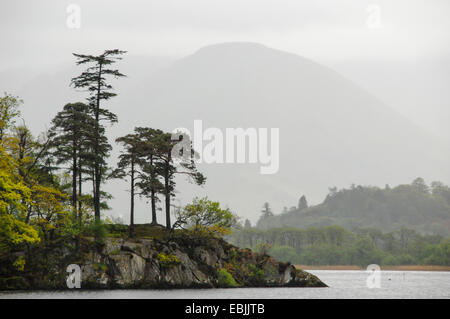 Scotch pine, Scots pine (Pinus sylvestris), rocky spit of land with trees on it in the Ullswater, the second largest - Stock Photo