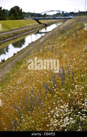 wild flower meadow at the Emscher, Germany, North Rhine-Westphalia, Ruhr Area, Essen - Stock Photo