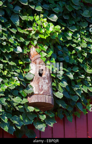 nesting box at wooden ivy-covered cladding, Germany - Stock Photo