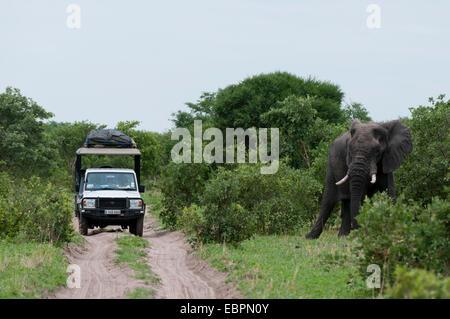 African elephant (Loxodonta africana), Khwai Concession Area, Okavango Delta, Botswana, Africa - Stock Photo