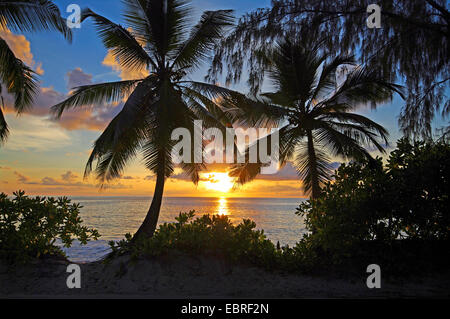 palms on the beach of Anse Takamaka on Mahe island at sunset, Seychelles, Mahe - Stock Photo
