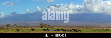 herd of elephants at a water hole in front of the Kilimanjaro, Kenya, Amboseli National Park - Stock Photo
