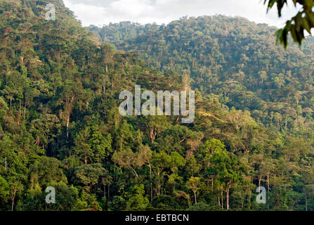 rainforest, Uganda, Bwindi Impenetrable National Park - Stock Photo