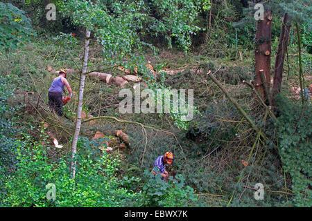 lumberjacks felling trees, Germany - Stock Photo