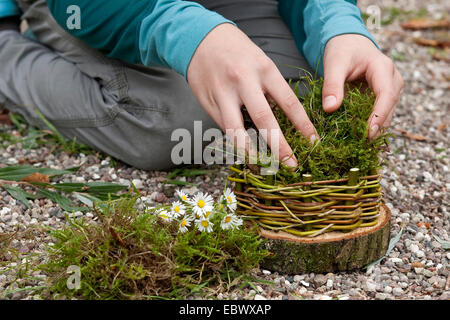 girl building an Easter basket from a tree disc, willow twigs, moss, daisies and coloured eggs; 4. step: padding - Stock Photo
