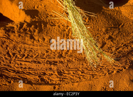 Africa, Namibia. Tok Tokkie Trails. Detail of red sand. - Stock Photo