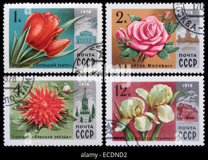 USSR - circa 1978: A post stamp printed in the Soviet shows image of flowers, series Flowers, circa 1978. - Stock Photo