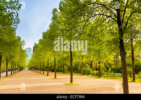 Tiergarten view with rows of trees in Berlin, Germany - Stock Photo