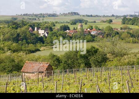 France, Allier, Saint-Pourcain vineyard, Verneuil-en-Bourbonnais - Stock Photo