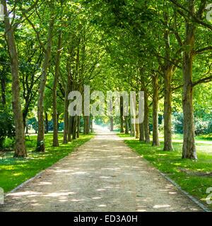 alley in tiergarten berlin in summer time - Stock Photo