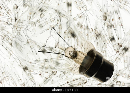 supported tungsten wire filament in clear light bulb chamber indicating flow of electricity and current against - Stock Photo