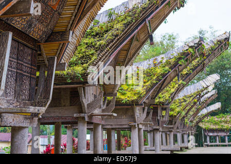 Traditional village of residential buildings with decorated facade and boat shaped roofs. Tana Toraja, South Sulawesi, - Stock Photo