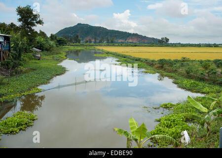 Rice paddies, Chao Doc, Vietnam - Stock Photo