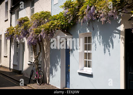 Twickenham, Ferry Road, wisteria hung terraced cottages - Stock Photo