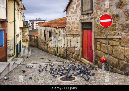 Vila Nova de Gaia, Portugal alley scene with pigeons. - Stock Photo
