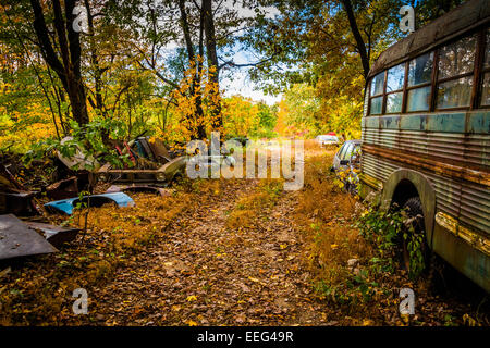 School bus and wrecked cars in a junkyard. - Stock Photo