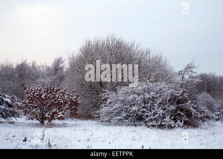Snow covered trees and bushes on the edge of Burnopfield Woods, County Durham. - Stock Photo