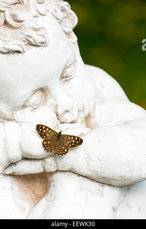 Single Speckled Wood Pararge aegeria resting on arm of statue in garden, Bilston, West-Midlands, August, 2013. - Stock Photo