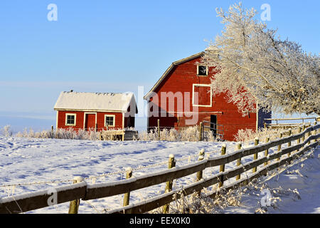 A winter scenic of a red barn and shed along a frosty horizon in rural Alberta Canada - Stock Photo