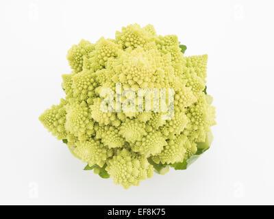 Romanesco aka Romanesque cauliflower or Romanesco broccoli - edible flower bud of Brassica oleracea. - Stock Photo